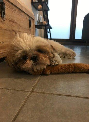 freelance travailler avec chien